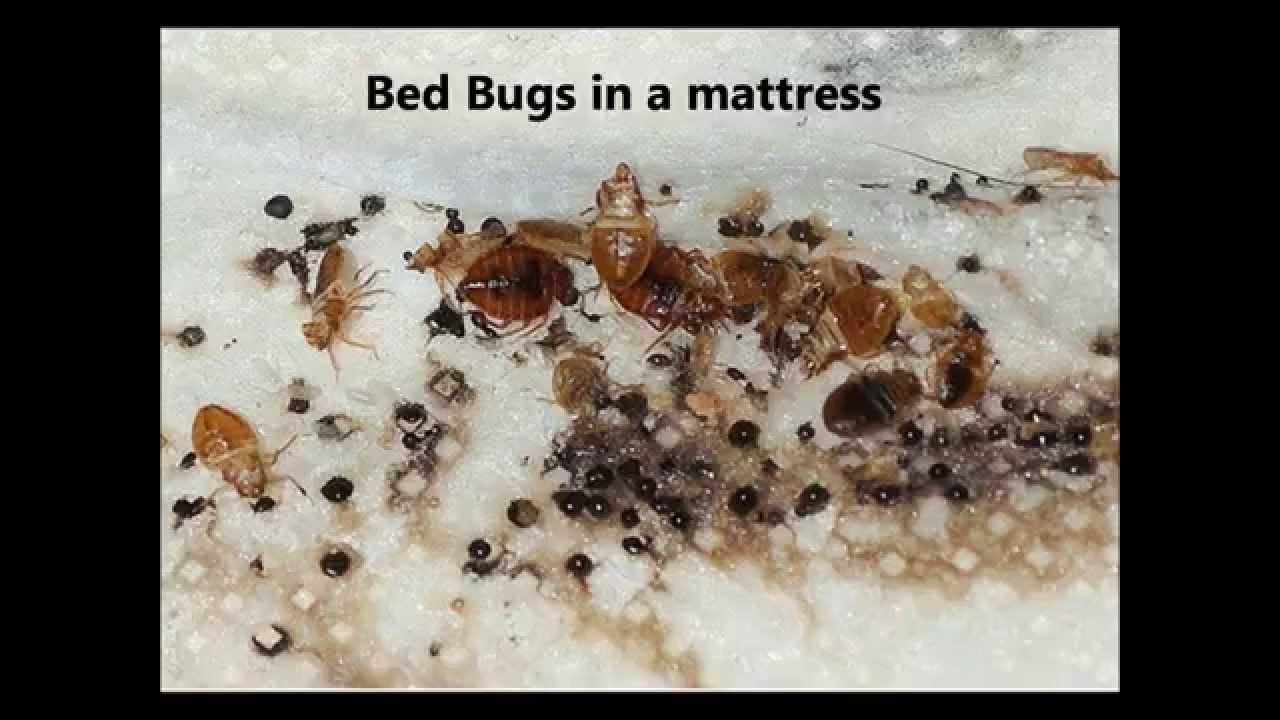 Top 5 Best Bed Bug Sprays (**2019 Review**) - Pest Strategies