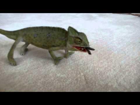 Chameleon (bukalemun) Eating