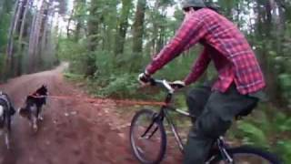 Dog Training | Bike Joring