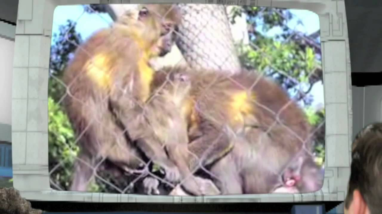 Monkey Love - YouTube