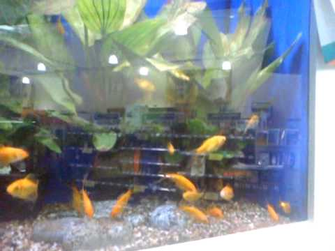 Pets At Home Fish Tank Youtube