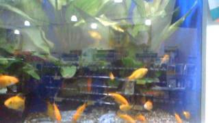Pets At Home - Fish Tank
