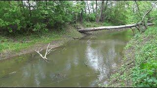 Мне не верят, что в этой речке полно рыбы. Блесна снова выручила