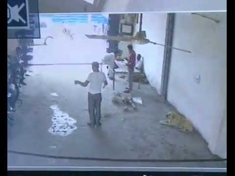 LIVE GUNSHOT  CCTV FOOTAGE IN NOIDA