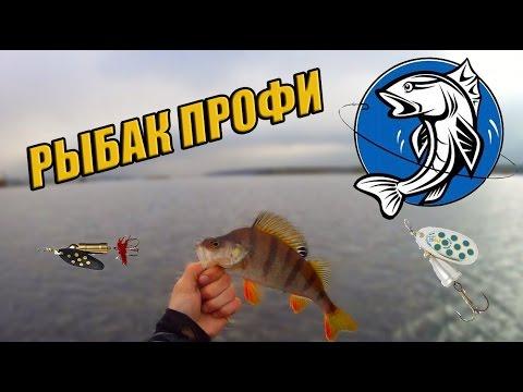 на что ловить окуня в трофейной рыбалке