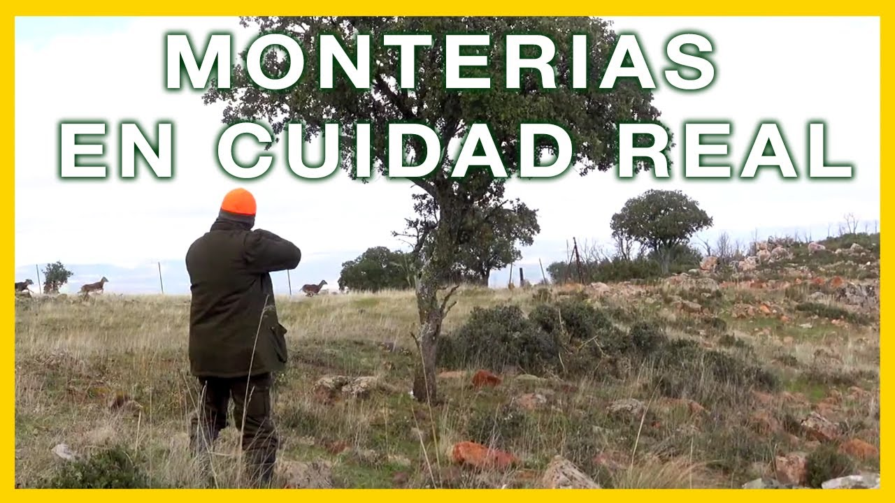 Monterias en Ciudad Real 💥🦌 🐐💥Videos de Caza Castilla la Mancha