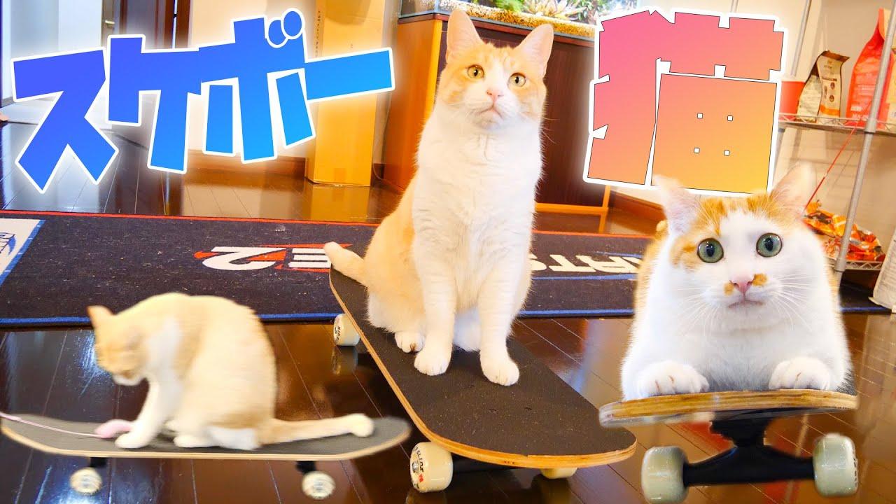 スケボーに乗って移動する猫が可愛すぎました