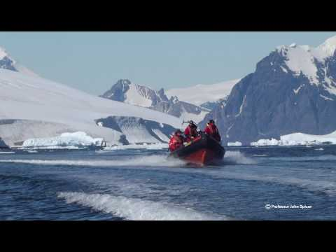 How sensitive is Antarctic marine life to climate change?