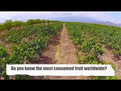 Own a fruit farm in the Dominican Republic and earn 20% annually over the life of your investment.