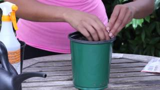 How To Plant Zinnia Seeds In A Pot : Garden Seed Starting