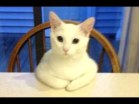 Thumbnail: Funny Cats Acting Like Humans Compilation 2015