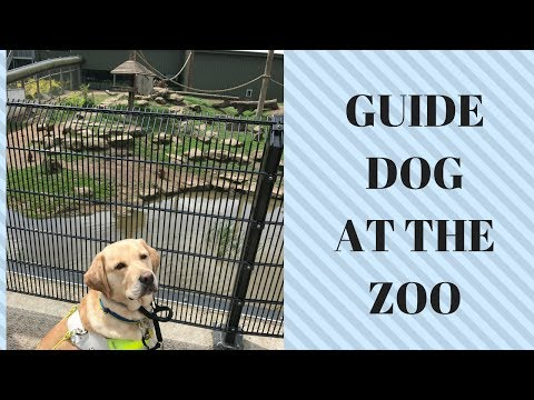 GUIDE DOG HUDSON'S FIRST VISIT TO THE ZOO