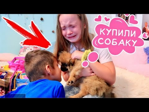 КУПИЛИ СОБАКУ / Первая встреча / РЕАКЦИЯ на СОБАКУ