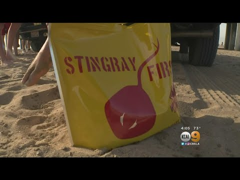 Stingray Injuries Spike In Huntington Beach