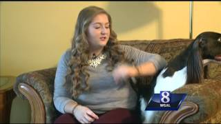 York County Canine To Compete In Westminster Dog Show