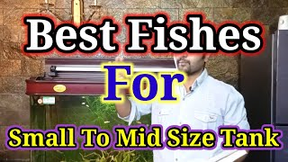 Best Fishes For Beginners / Best Fishes For Small To Mid Size Aquarium / Best Snail / Best Shrimps