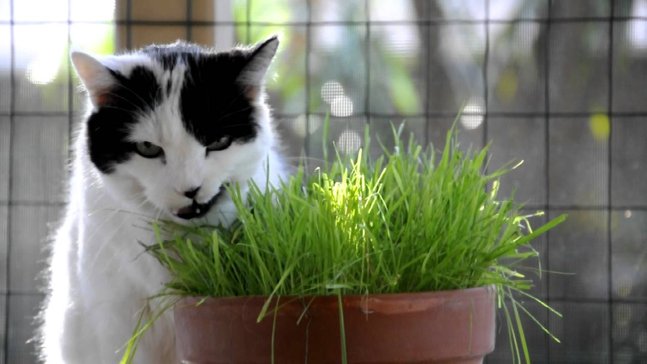 Cats on Grass | FunnyCat.TV