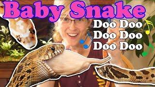 baby-snake-update-bullsnakes-hognoses-scaleless-rat-corns
