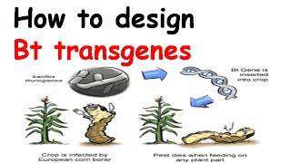 كيفية تصميم Bt الجينات المحورة