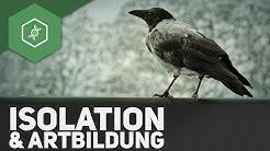 Isolation & Artbildung - Evolutionsfaktoren 5 ● Gehe auf SIMPLECLUB.DE/GO & werde #EinserSchüler