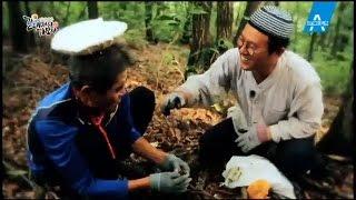 [예고] 산할아버지가 알려주는 식용버섯과 독버섯 구분법?_채널A_갈데까지가보자