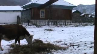 видео Мир Квартир — недвижимость в Алтайском крае | Продажа и аренда, квартир, домов, земельных участков и другой недвижимости