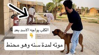 شاهد وفااء الكلب مع الاسد 🥺 بعد الفراق لمدة سنه 💔