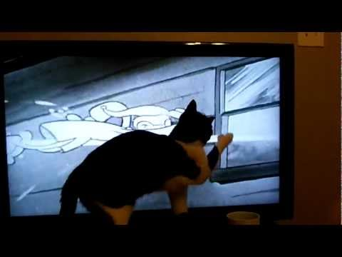 Cat plays with cartoon
