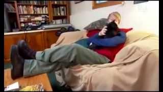 Мейн-кун: фото, видео, описание породы, характер. Кошка породы Maine Coon