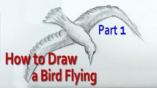 How to Draw a Bird Flying: 1