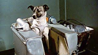 10 Animales enviados al espacio :(