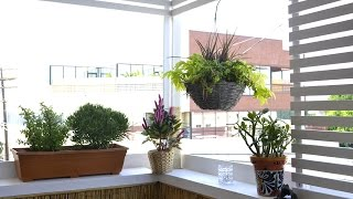 How to decorate a small rental apartment balcony - LA edition - part 1