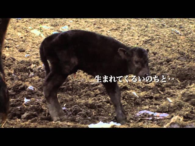 原発事故で誰もいなくなった町に動物と共に生活する人を追ったドキュメンタリー!映画『ナオトひとりっきり Alone in Fukushima』予告編