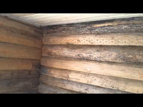 видео: Охотничья избушка #1:Ознакомление.