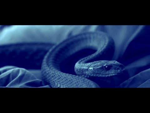 SERPENT (2017) Official Trailer (HD) KILLER SNAKE