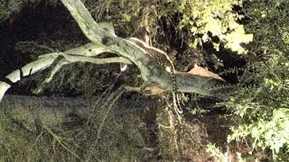 Djuma: Leopard climbs on to dead tree at end of dam - 18:50 - 07/21/18 thumbnail