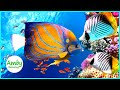 Download Amazing Coral Reef Aquarium - Fish Tank & The Best Relaxing Music -2 Hours Sleep & Meditation Music