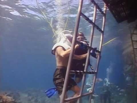 Shane O goes to CORAL WORLD in St.Thomas, VIRGIN ISLANDS (NYATG)
