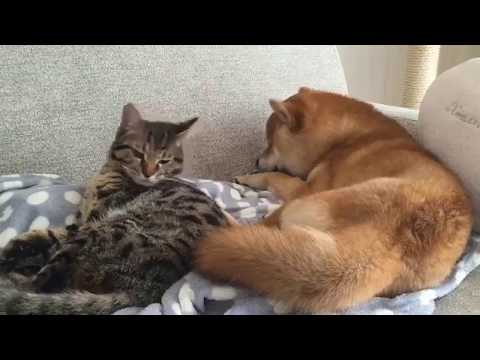 FUNNY DOG and CAT Videos Cats vs Dogs Compilation #10