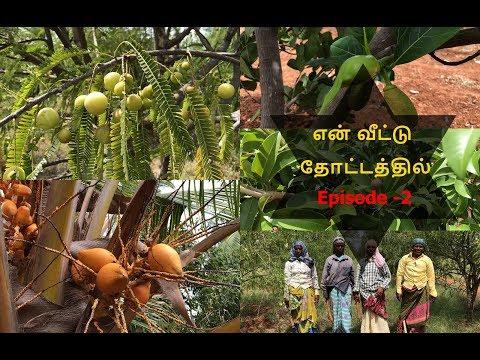 Farm in Theni/எங்கள் தோட்டம் /நெல்லிக்காய் தோப்பு /தேனி தோட்டம்/ Farmland/ Farm in Govindanagaram