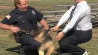 Untamed and Uncut: Attack Dog Bites Reporter thumbnail