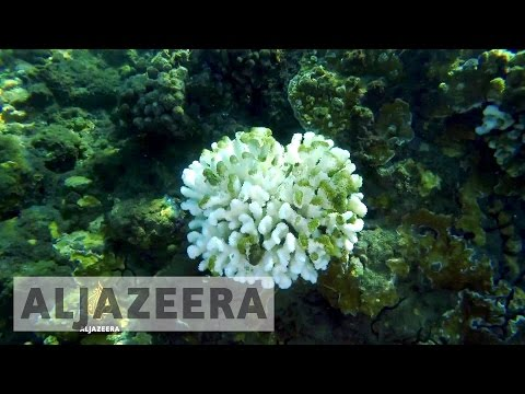 Coral catastrophe: The fight to save our dying reefs - TechKnow