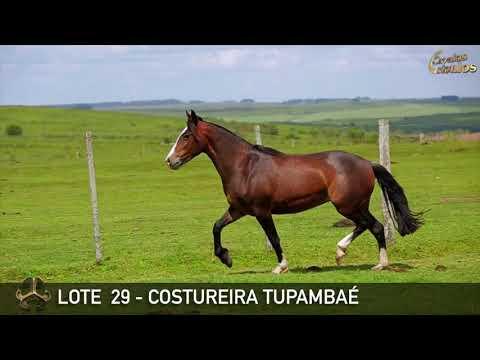 LOTE 29   COSTUREIRA TUPAMBAÉ