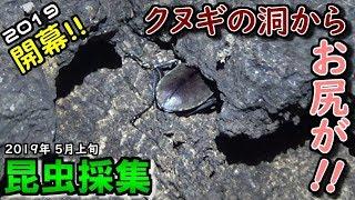 2019年5月3日、昆虫採集開幕でーす! 【関連動画】 2019年カ...