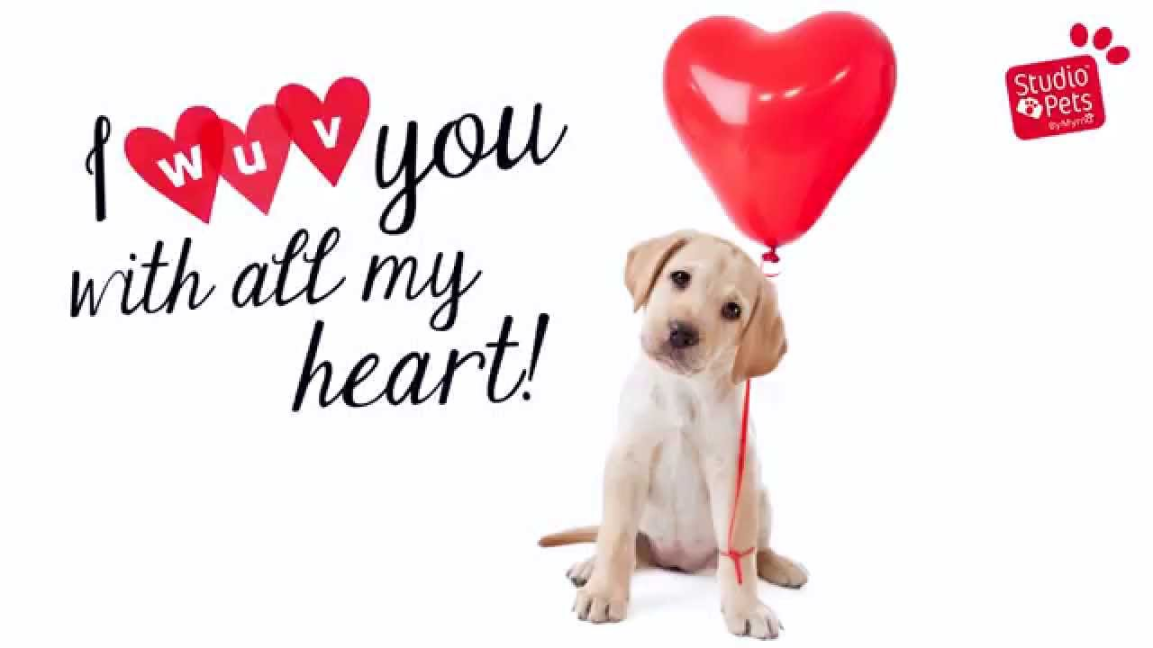 how to know if your puppy loves you