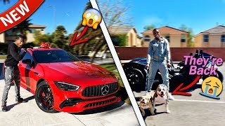 I Surprised My Family By Finally Bringing Our Dogs Home I Also Got A Big Surprise!