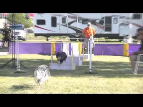 Launch Flyball 2015