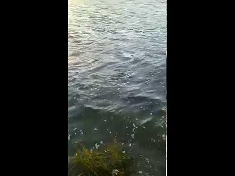 рыбалка в оренбургской области на сазана
