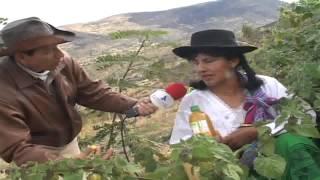 AGUAYMANTO: RIQUEZA Y SALUD