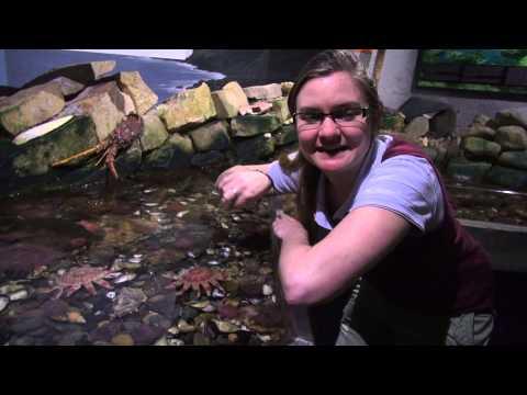 Maryport Aquarium Tour